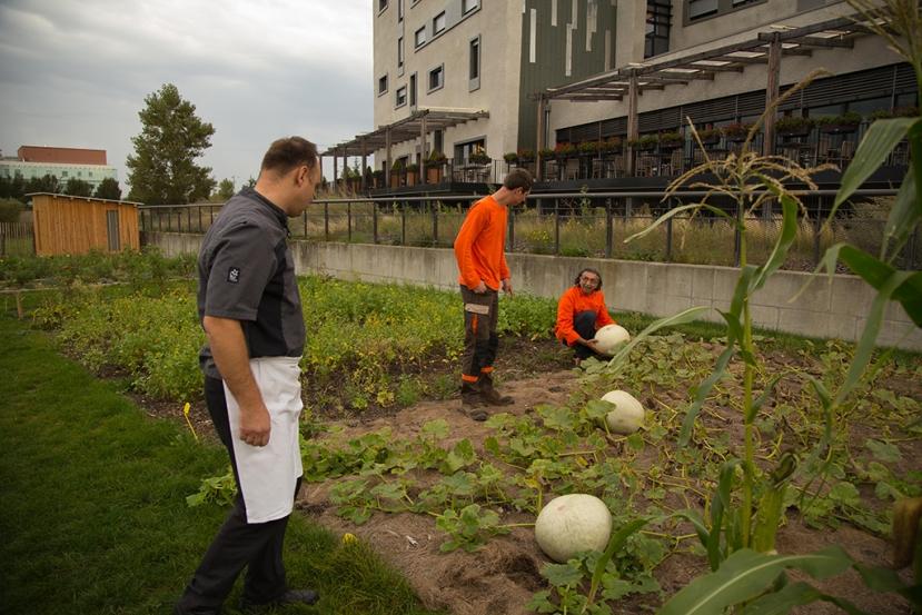 au centre : Rémi Bozon, jardinier, à gauche et à droite : laurent lecompte et alain alexanian, cuisiniers, autour de la courge blanche de Lyon. albandelacour-agencedesours